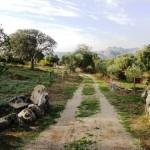 Arzachena, immerso nella quiete della campagna, splendido miglioramento fondiario