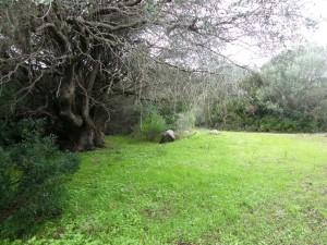 Santa Teresa gallura splendido terreno con fabbricato rurale Val Di Mela