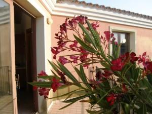 Tra Palau e Santa Teresa Gallura,villino al primo piano con giardino AFFITTO